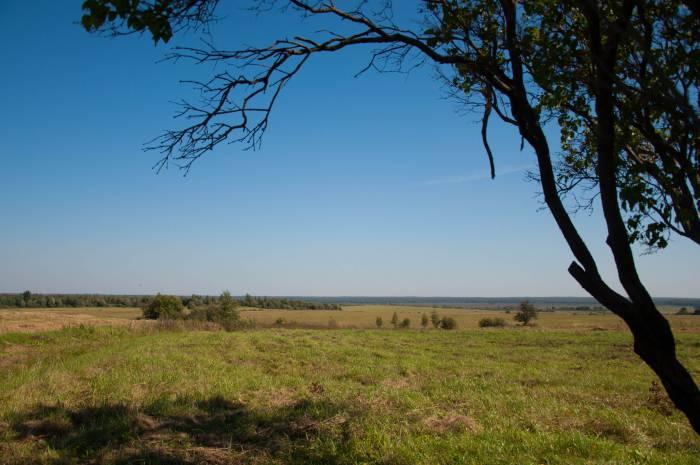 Здесь начинались бескрайние Черейские болота. Фото Анастасии Вереск