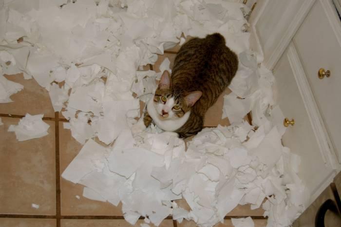 Туалетная бумага? А зачем она нужна? Фото ushilapychvost.ru