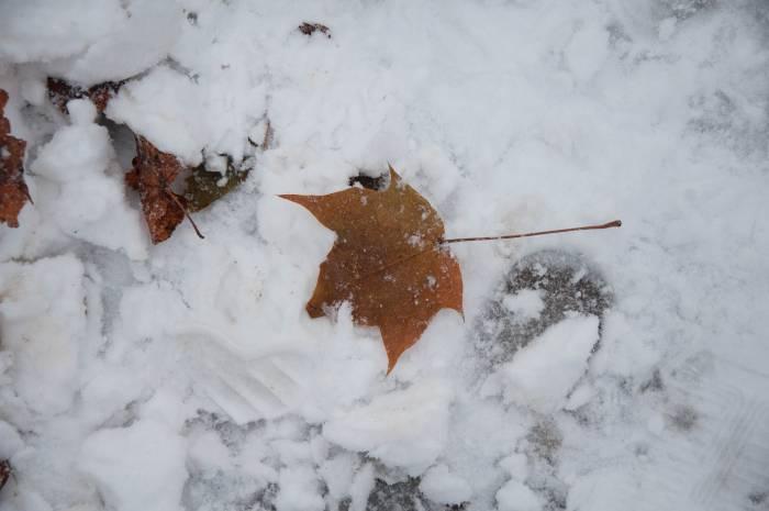 Снег в этом году выпал очень рано. Фото Анастасии Вереск