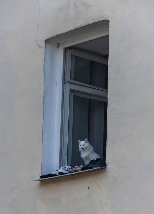 Окно - источник опасностей. Фото Анастасии Вереск