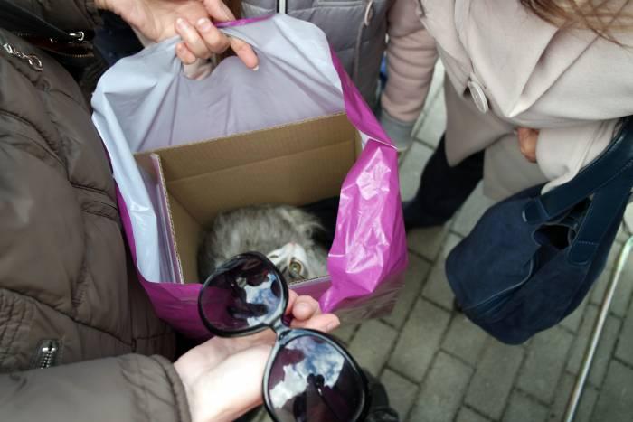 """""""Живая"""" коробка. Фото Анастасии Вереск"""