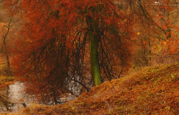Утром мы во двор идем — листья сыплются дождём...