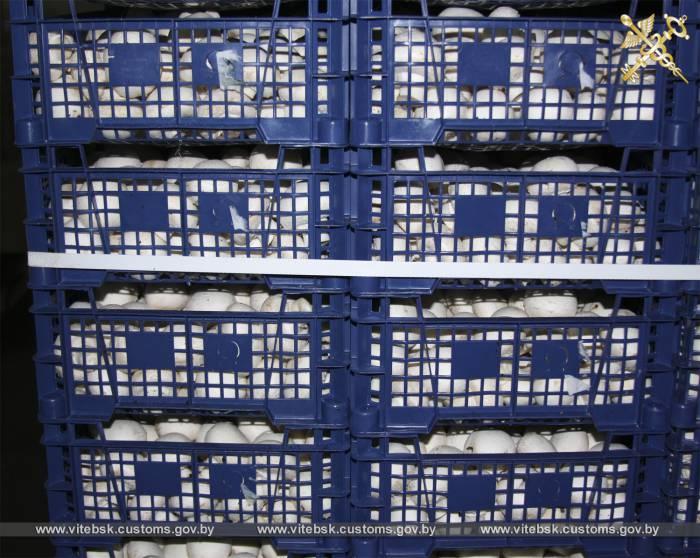 В Городокском районе Витебская таможня задержала 8 тонн шампиньонов