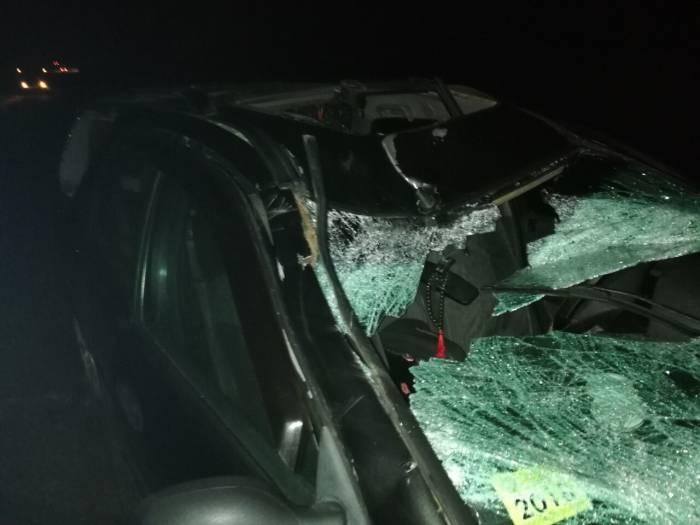 Около Кировской под Витебском водитель сбил лося. В результате ДТП у пассажирки травма головы и перелом шейного отдела позвоночника
