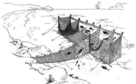 Сети тоннары