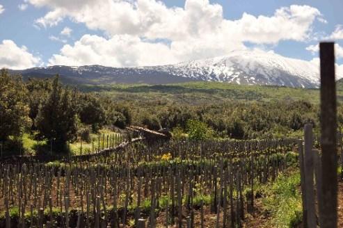 Однодневный винный тур на Этну