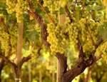 Винные туры на Сицилии