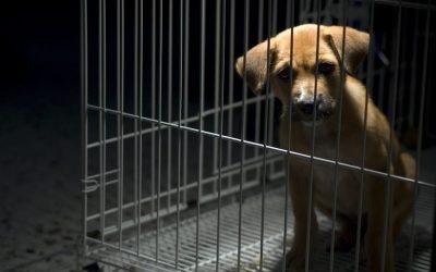 5.580 cas recensés de maltraitance animale en Flandre en 2019: le Vlaams Belang veut des peines exemplaires!
