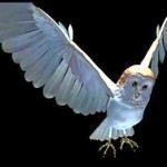 Understanding Jareth the Goblin King: How he can help us succeed in life – (Part 1) - http://vlnresearch.com/understanding-jareth-the-goblin-king-part-1 Goblin King Jareth CG barn owl form image