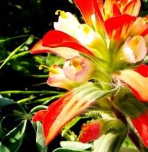 sunrise flower2