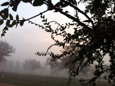 enveloped in fog