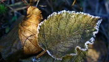 В Саратовской области ждут заморозки и порцию сильных дождей
