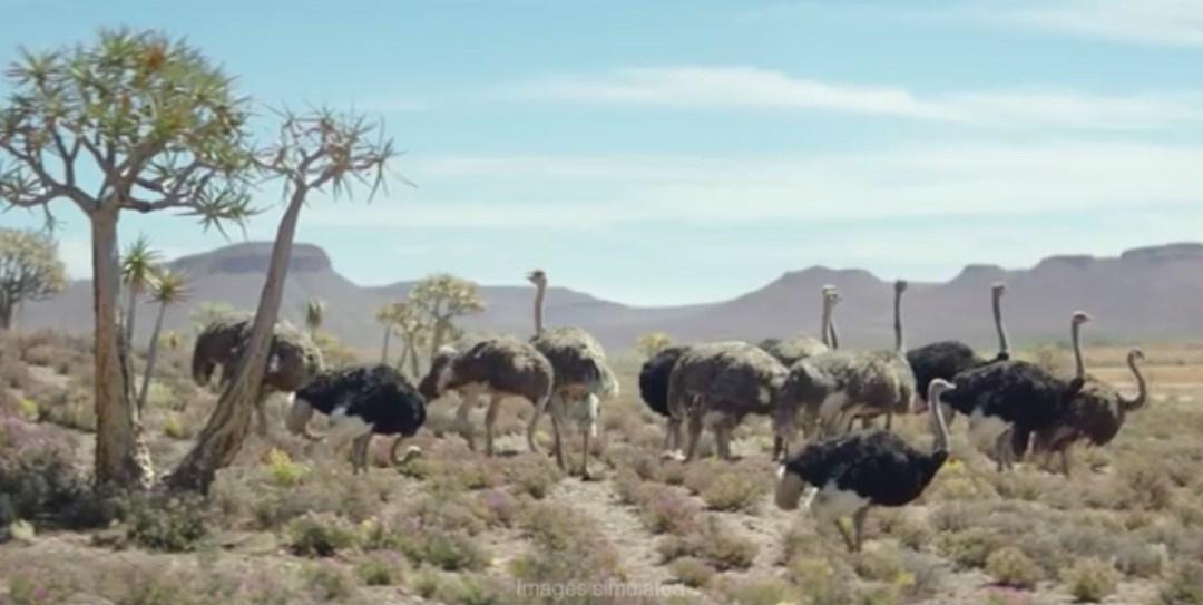 Samsung TVC Ostrich