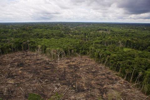 Удивительная Амазония. Как выглядит самый молодой парк на планете (ФОТО)