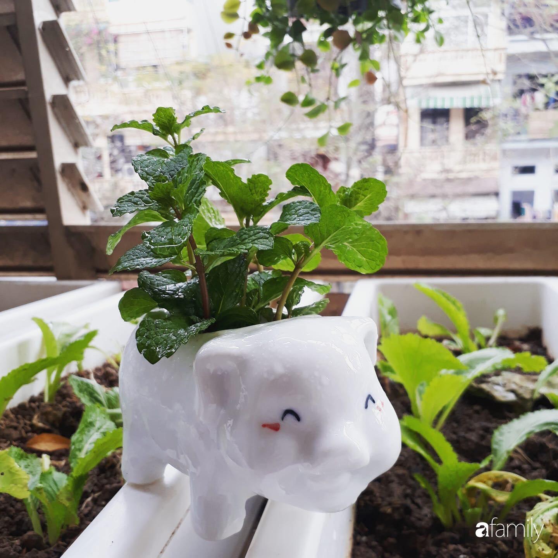 Ban công tập thể biến thành khu vườn đủ loại rau quả và hoa nhờ bí quyết đặc biệt của mẹ trẻ Hà Nội - Ảnh 3.