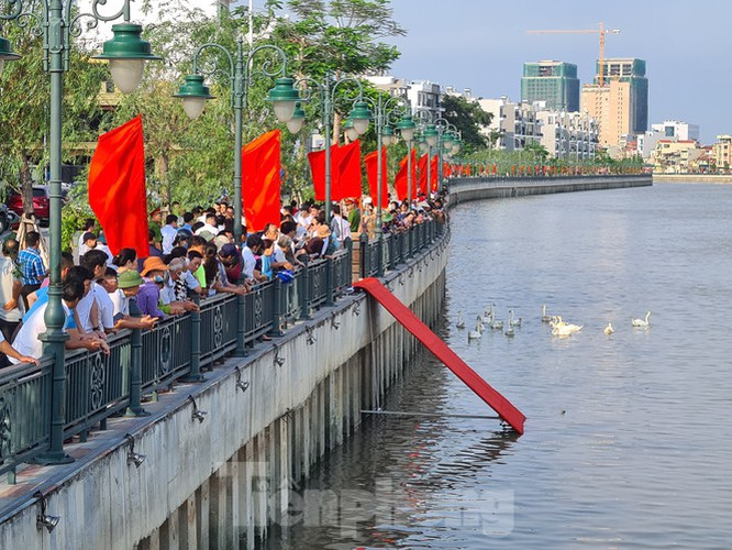 65 pairs of swans released into hai phong river hinh 3