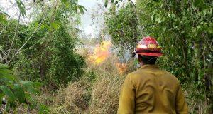 Bomberos trabajaron para contener el incendio forestal.