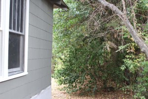 Ms Jucys Yard- from Side Toward Back before