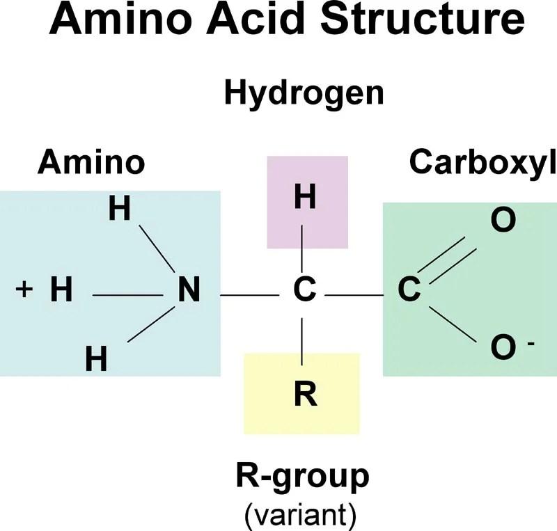 wat zijn essentiele aminozuren