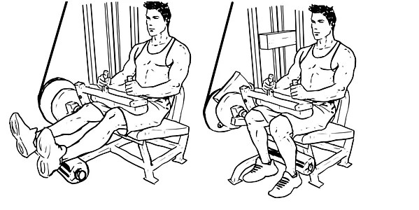 Seated leg curl hamstrings