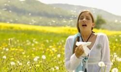 stuifmeelkorrels tegen hooikoorts
