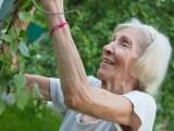 oudere vrouw tuiniert