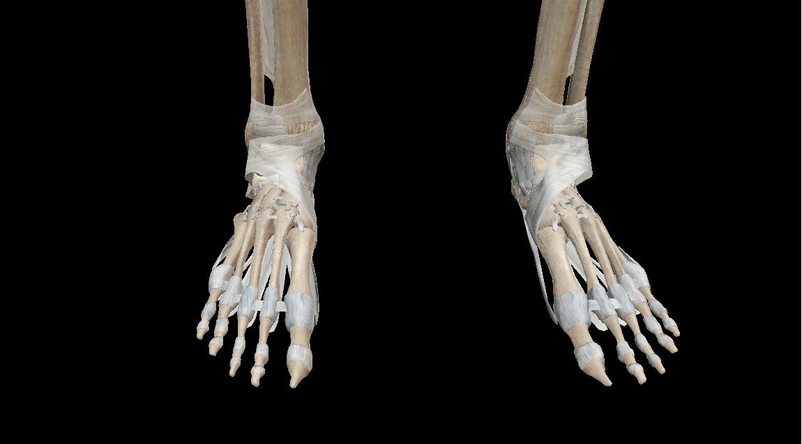 Stijve voeten