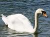 10.05.2012 -Durchblick im Greizer Park