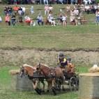 Thüringer Landesmeisterschaft im Ein- und Vierspännerfahren in Mohlsdorf