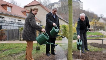 Baumpflanzung in historischer Lindenallee im Fürstlich Greizer Park