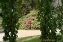 """Der Fürstliche Park - das """"grüne Gold"""" der Stadt Greiz"""
