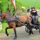 Mohlsdorf: Thüringer Landesmeisterschaft im Vier- und Einspännerfahren