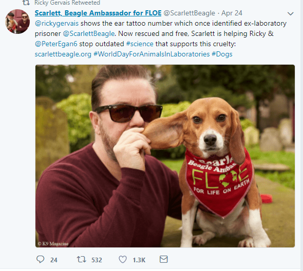 Tweet from a lab-animal rescue organisation shows Ricky with a rescued Beagle named Scarlett and a mention of the millions he has given to animal wefare groups
