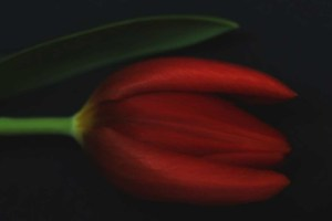 """Happy Valentines Day"" Leila Raymond"