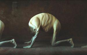 Animals By: Marcin Weron