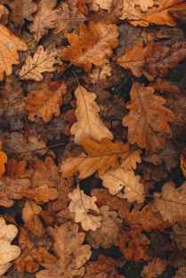 yellow fallen leaves decaying on forest ground