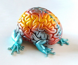 How Coaching Influences the Brain – A Neuroscience Perspective