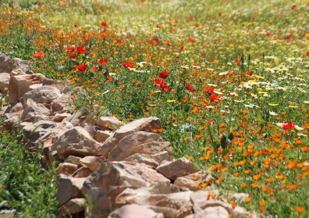 Photographie d'une prairie a 5 km de Beni Mellal