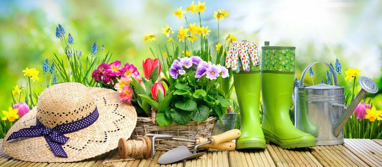 photo jardinage
