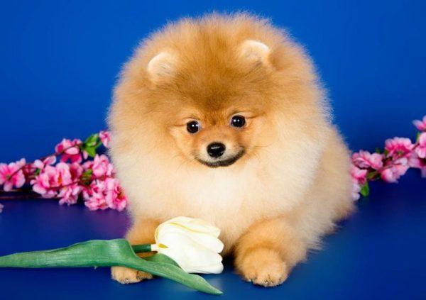 Собаки, созданные для хорошего настроения - Вокруг Света