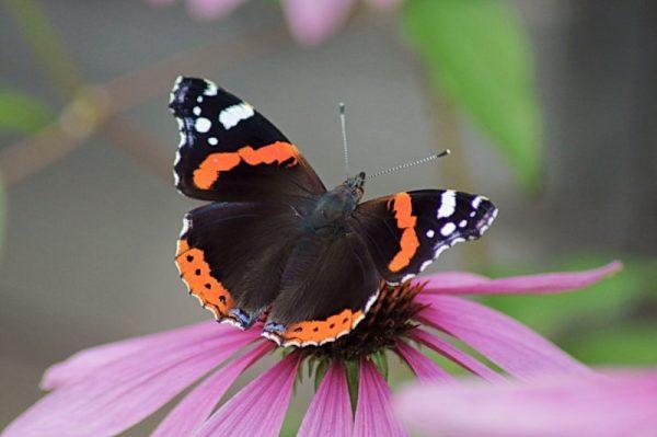 Самые красивые и удивительные бабочки Земли - Вокруг Света