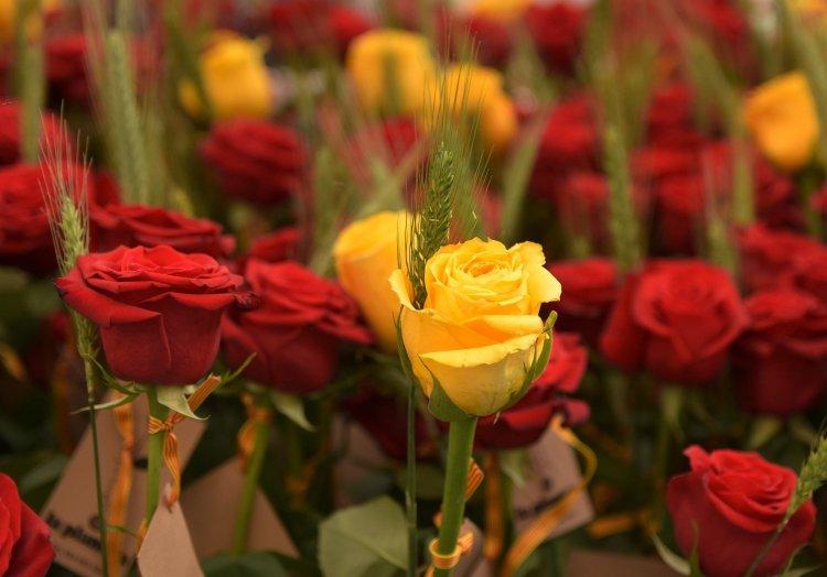 Rose per San Jordi pixabay.com
