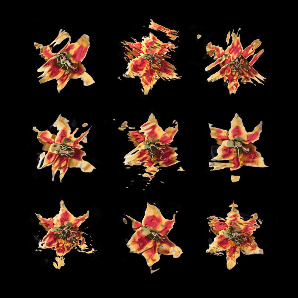 Fleurs - Photographie - 50 x 50 cm