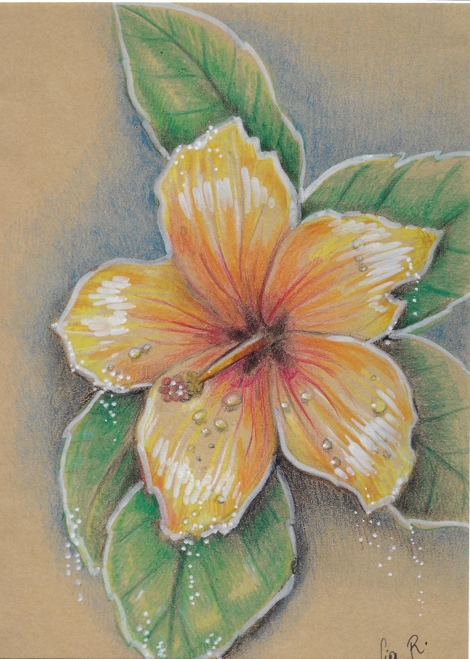 lia-fleur-dessin-papier