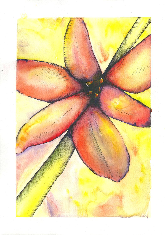 Celine-Barrier-fleur à l'aquarelle 1