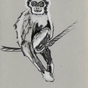 Claudine Santelli – Gibbon à mains blanches