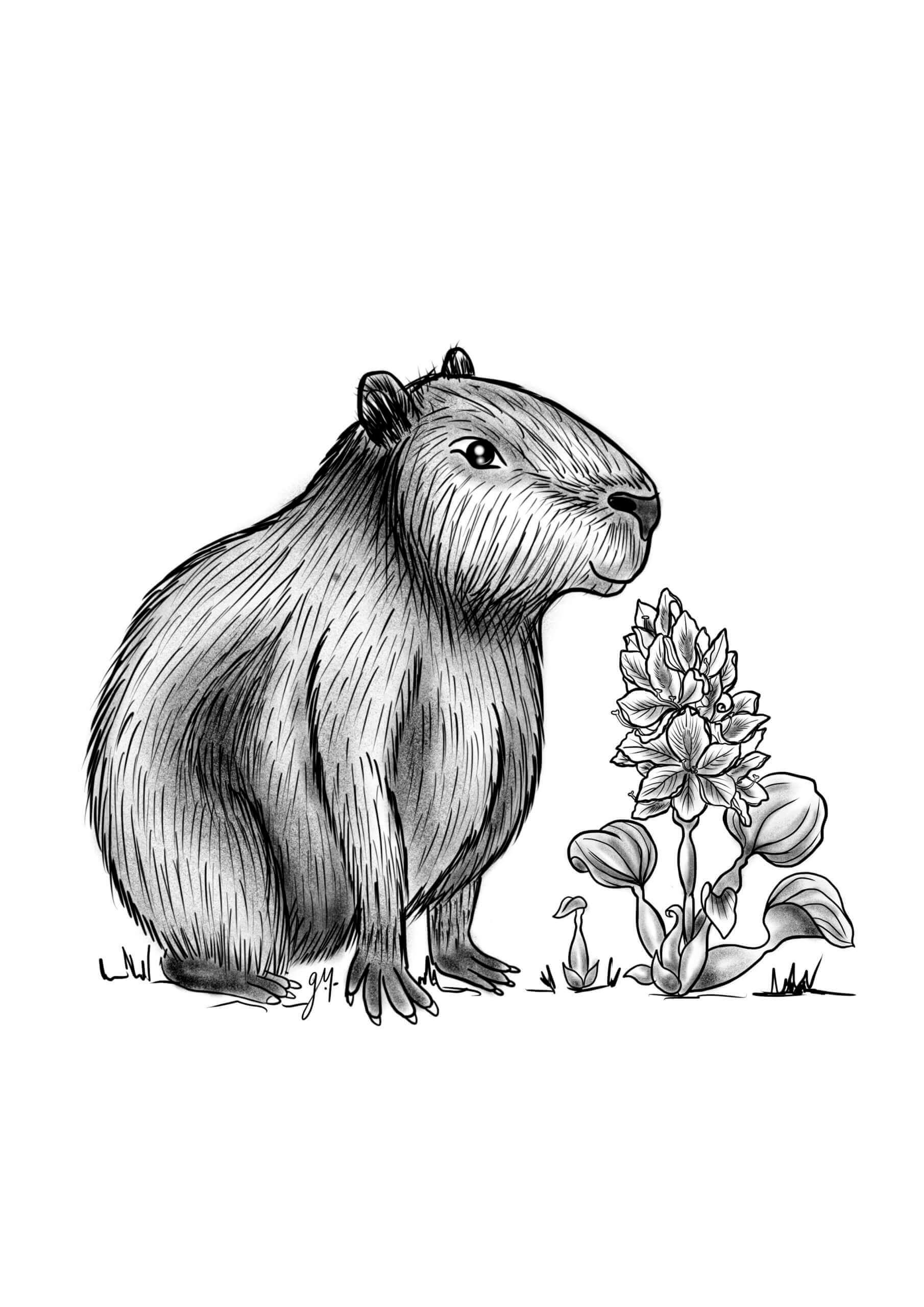 Gallïane_Capybara et sa Jacynthe d'eau
