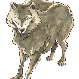 Sophie Navas – Loup gris