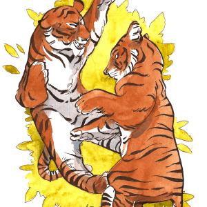 Sophie Navas – Tigres
