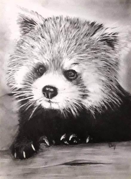 Chrispicture - Panda roux